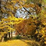 Ciepielowice ul.Leśna 1